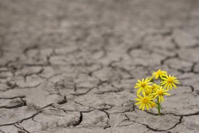 resilience (1).jpg